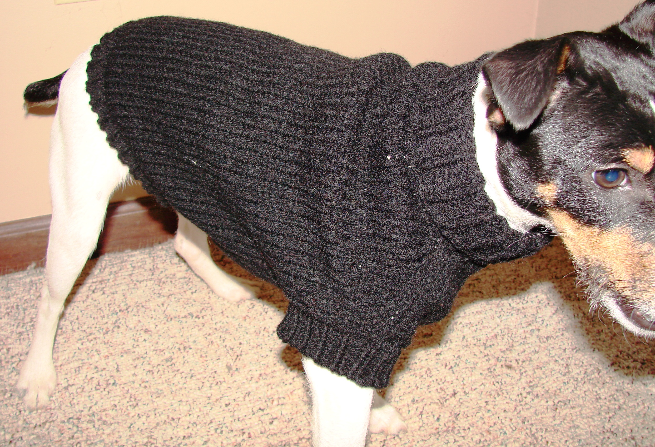 Knitting Pattern Dog Jacket : Knitted Dog Coat Cckittenknitss Weblog